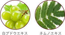 白ブドウエキスとネムノエキス画像イメージ